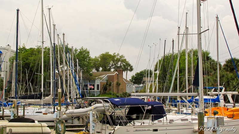 Rows of sailboat masts at Melbourne Harbor Marina