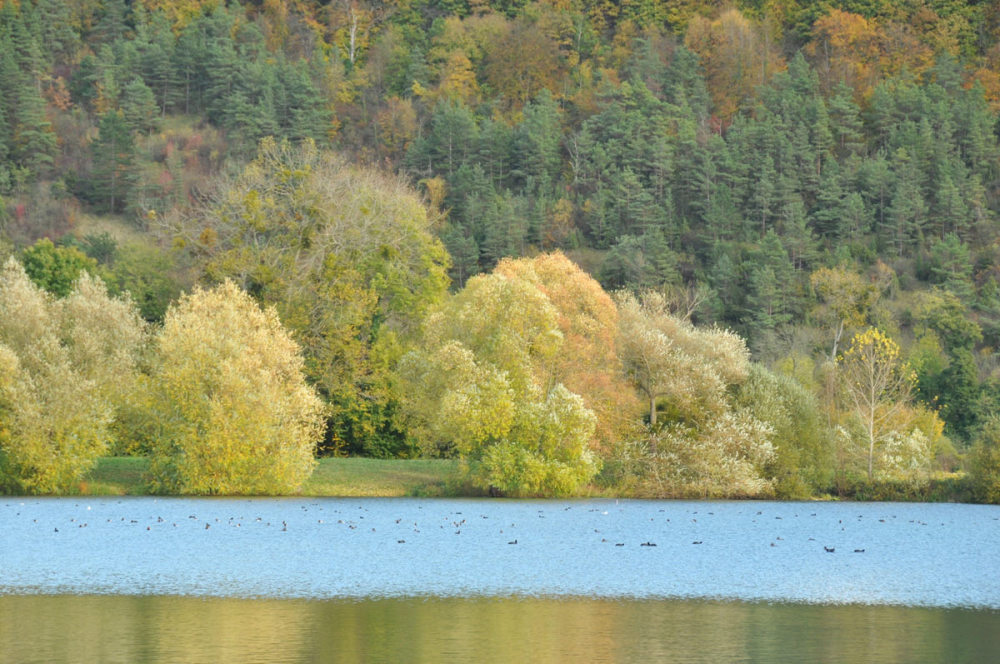 trees on the side of a pond at Acquigny (Eure)