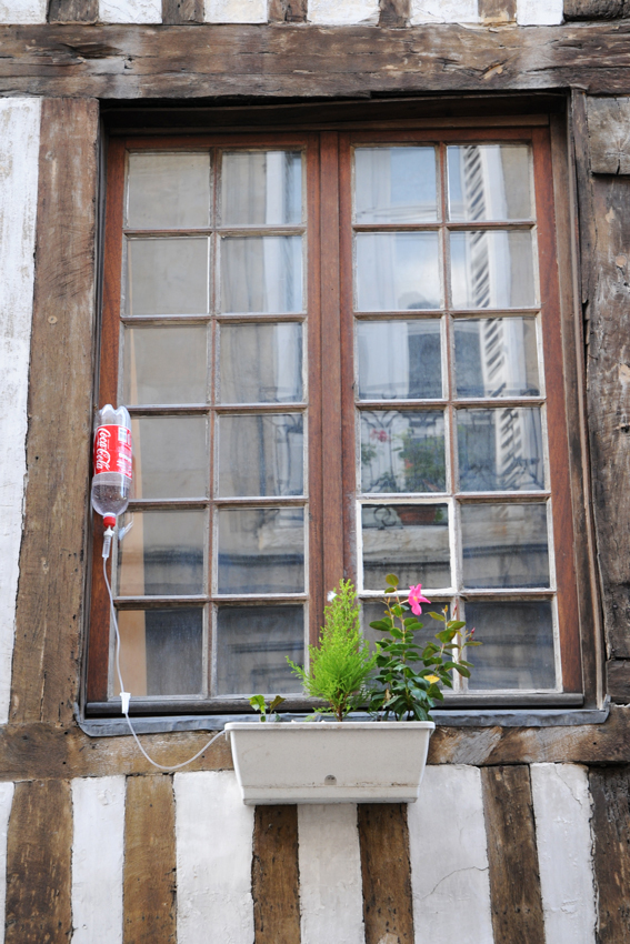 flowers in a window box are on a drip