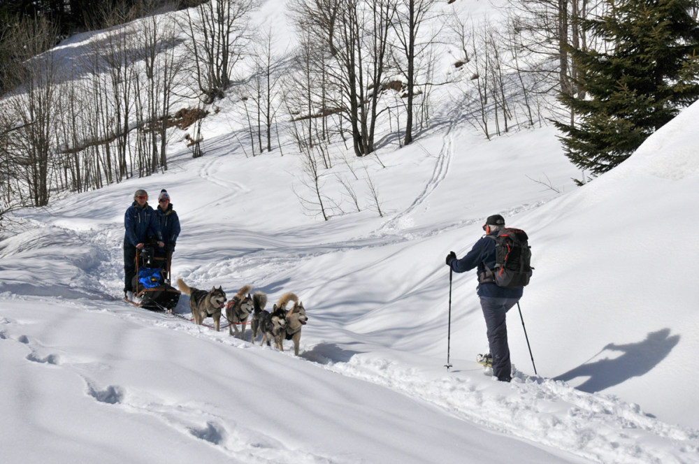 a dog team passes a snowshoes walker