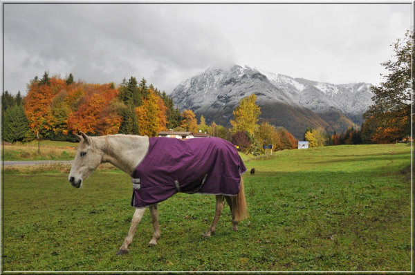 a horse with a purple coat