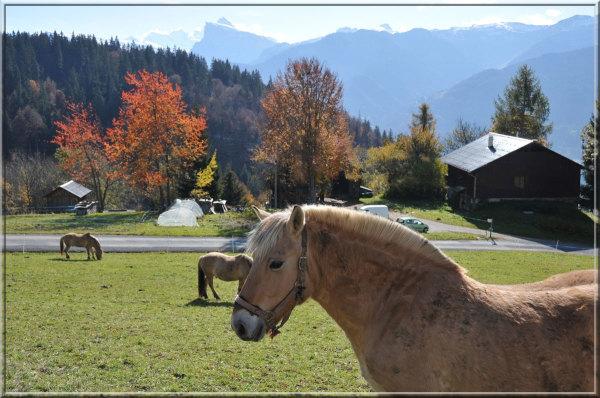 horses at Samoëns, Haute-Savoie