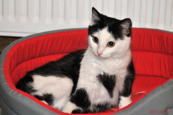 cat in his basket
