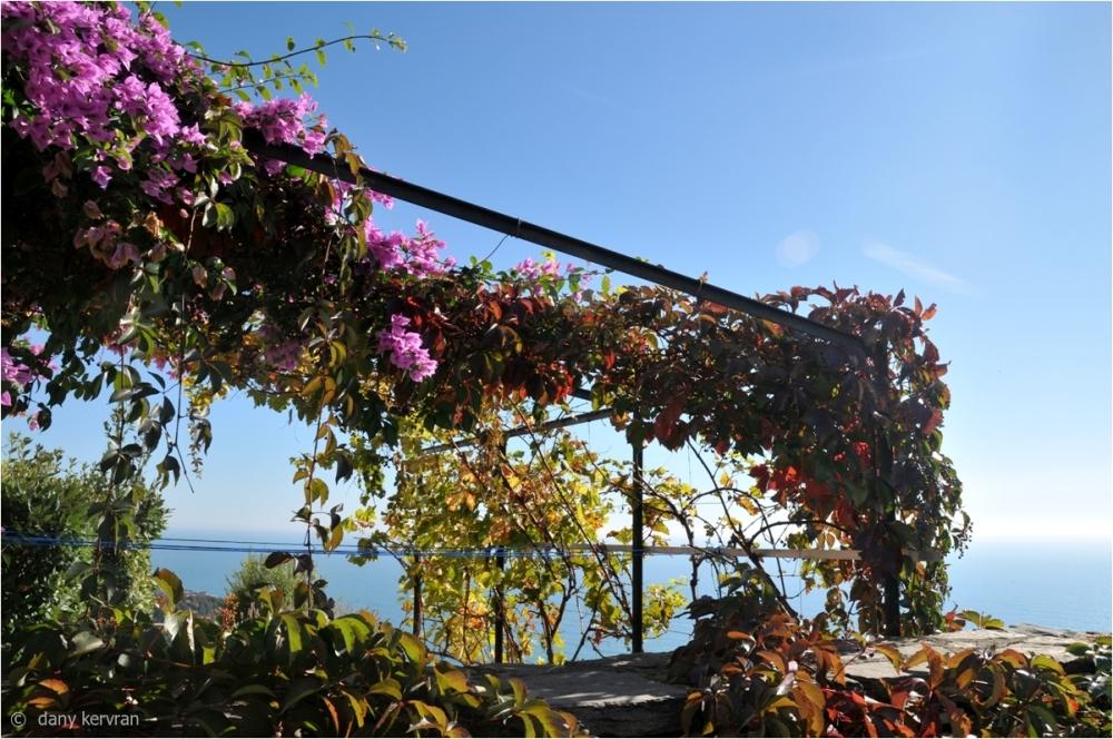 flowered pergola