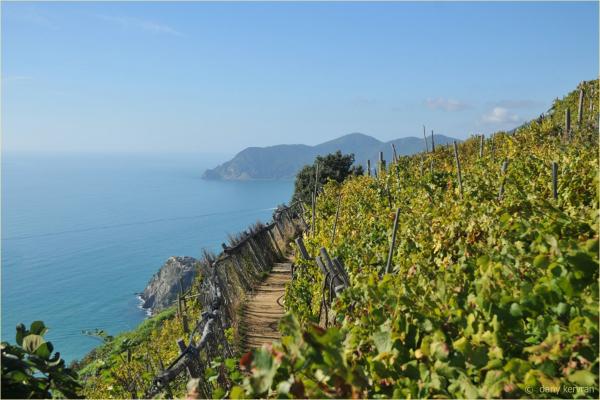 view on vineyard and Corniglia