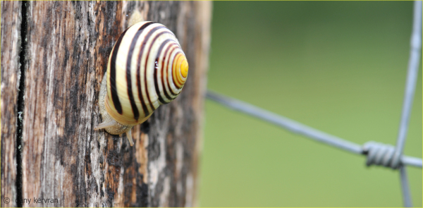 a snail on a trunk
