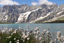 fleurs en montagne     flowers in mountains (5)