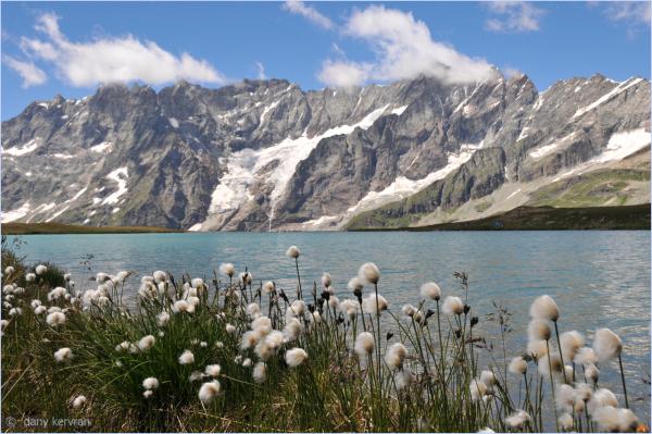 cottongrass close to the Matterhorn