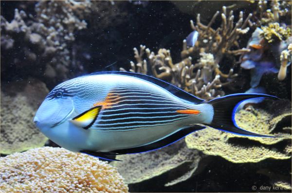 fish in an aquarium of the Oceanographic Museum