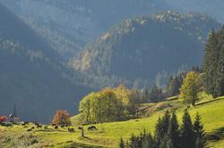 vues d'automne     autumnal views (1)