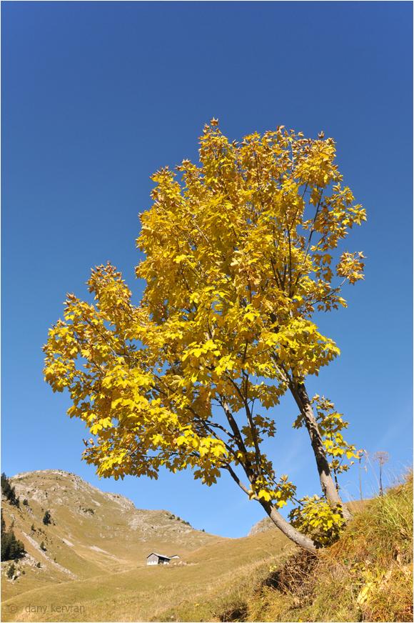autumns in mountain of Haute-Savoie