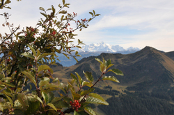 vues d'automne     autumnal views  (15)