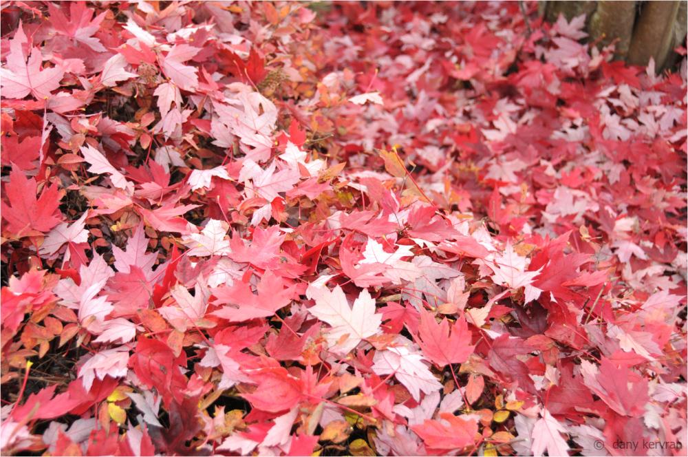leaves fallen under a tree