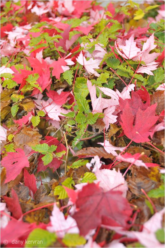 leaves fallen on a line
