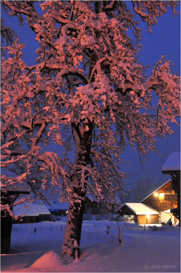 a snowy tree and a chalet