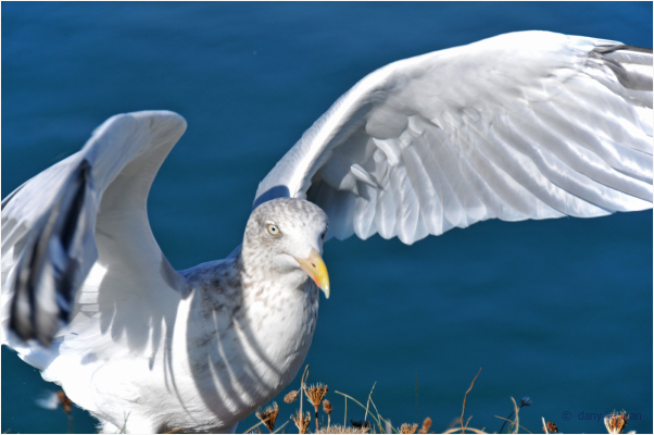 a gull with open wings