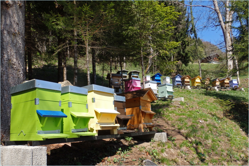 hives painted in bright colours