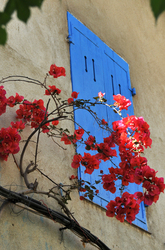 les volets bleus     blue shutters