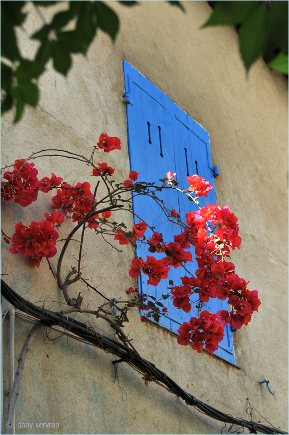 blue shutters in a street of Cassis