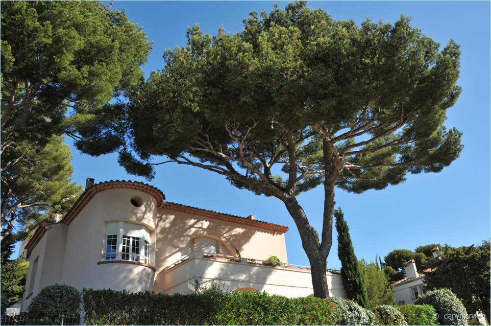 white house of Cassis under pines