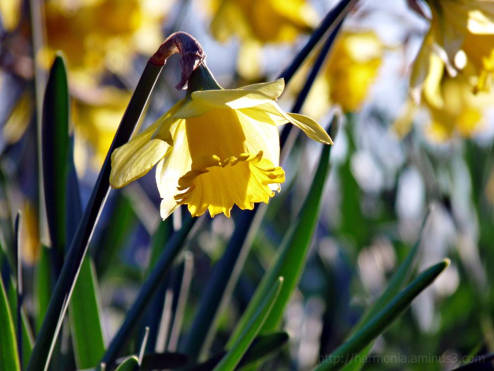Un avant-goût de printemps