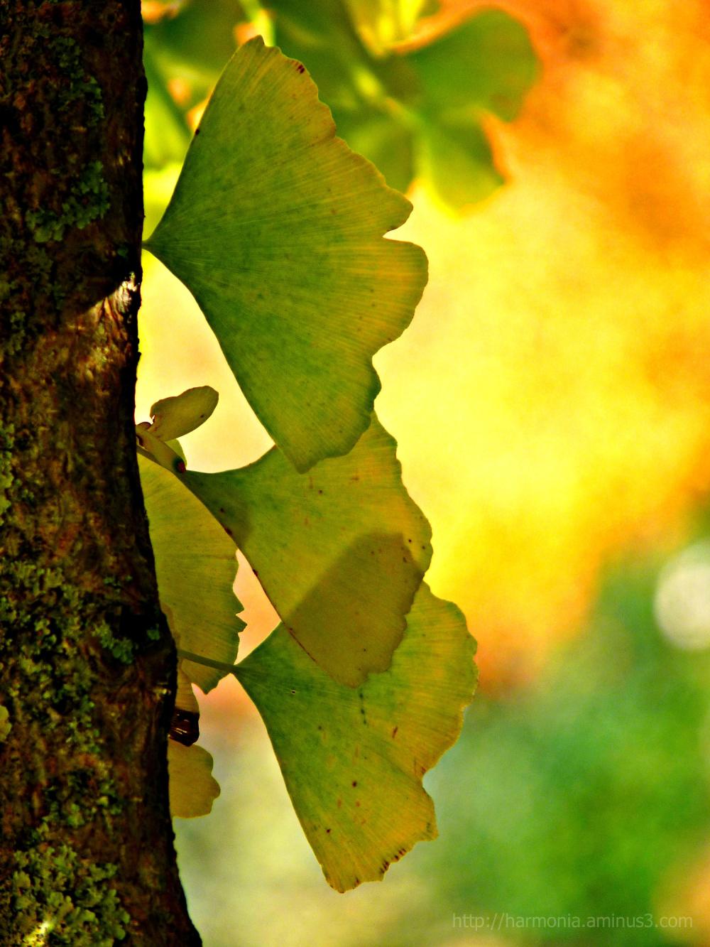 Souvenir des couleurs d'automne