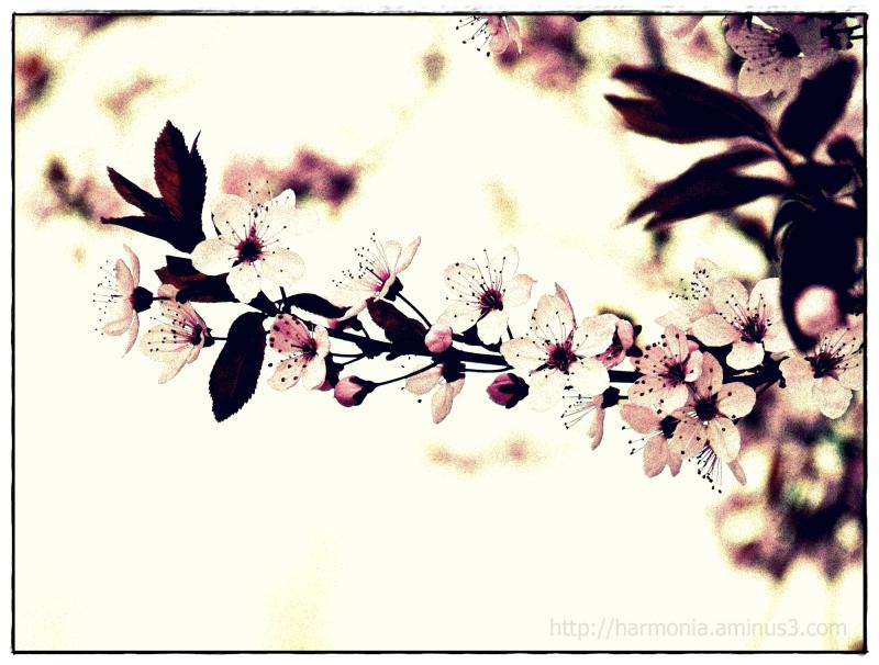 Impression de printemps