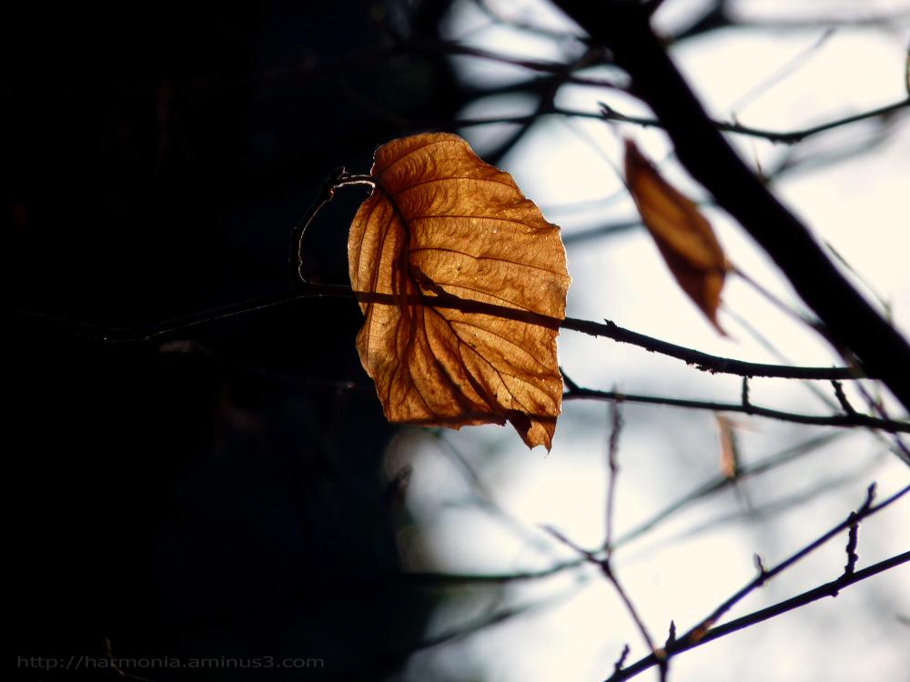 La danse des saisons