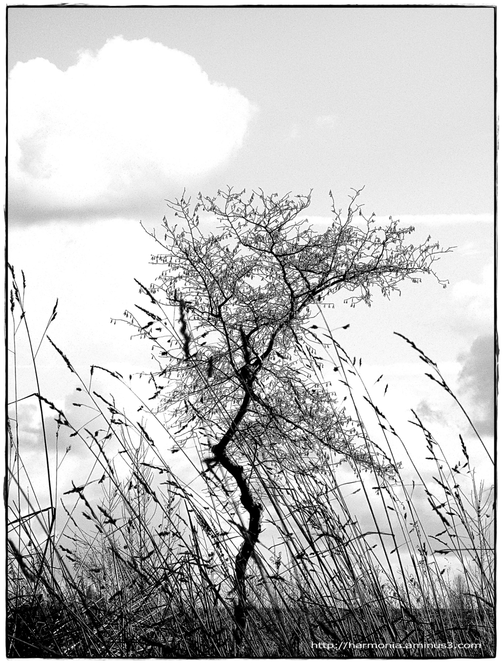 Les herbes qui voulaient dépasser l'arbre...