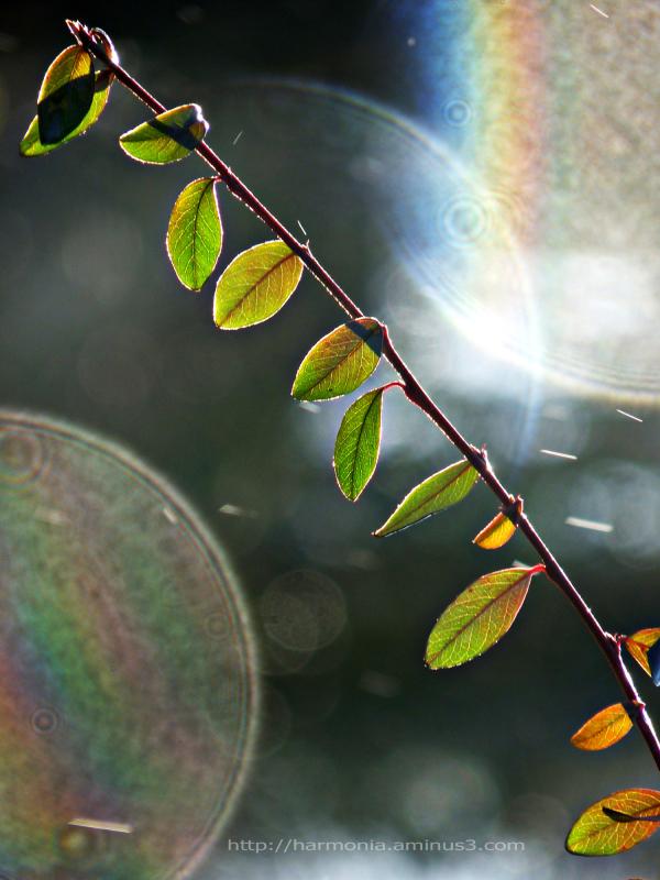 De pluie et de soleil