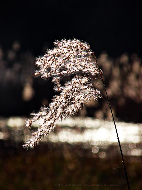 L'hiver tire sa révérence dans un vent de lumière