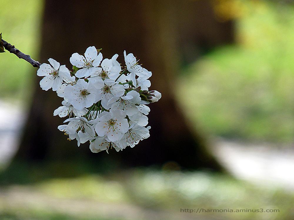 L'arbre et la fleur