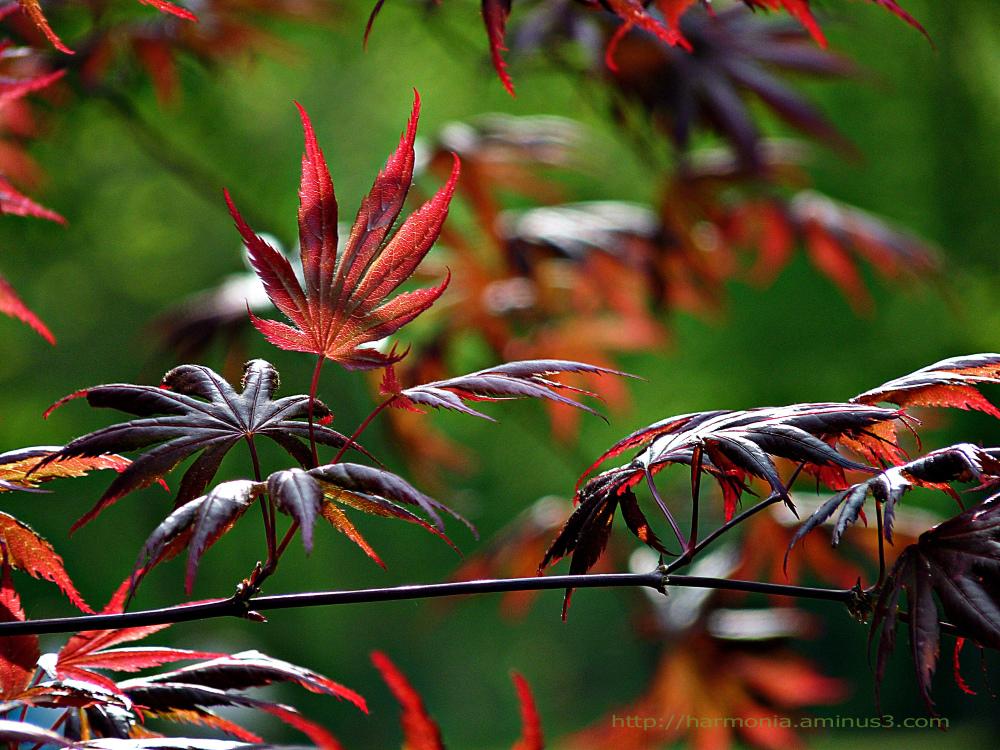 Rouge printemps