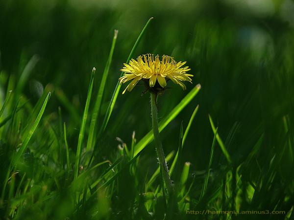 Secret d'herbe