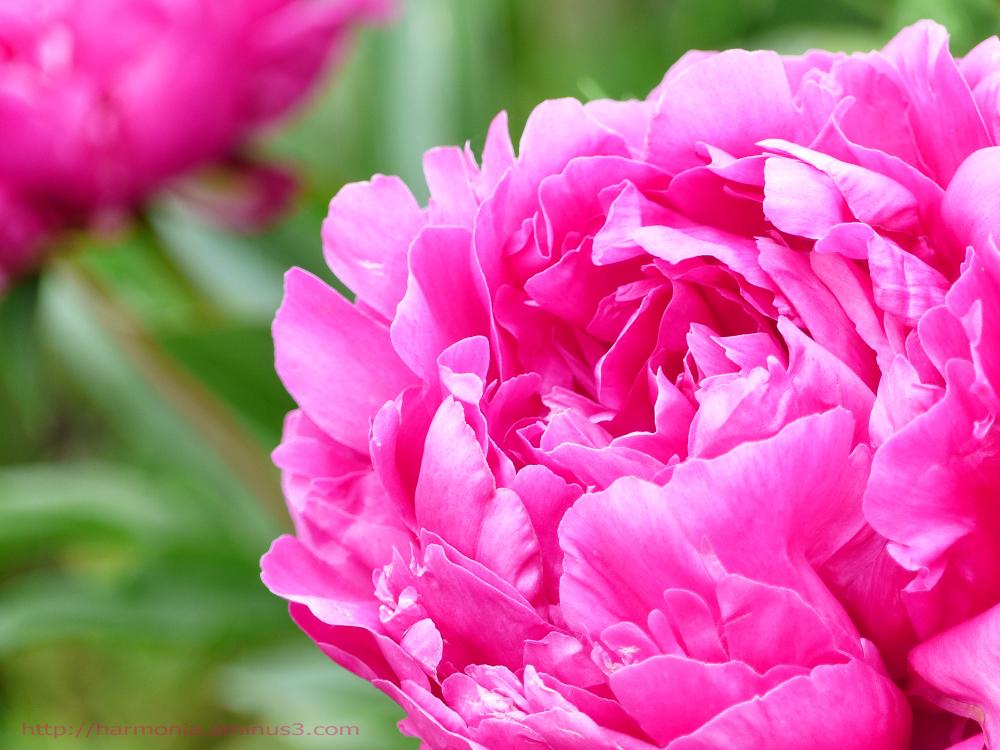 Samedi en rose