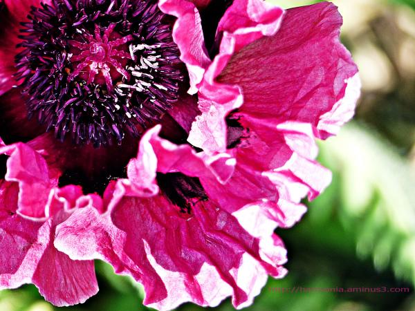 Féminitude florale