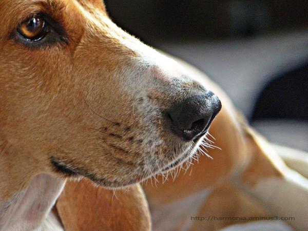 Vie de chien... (1)