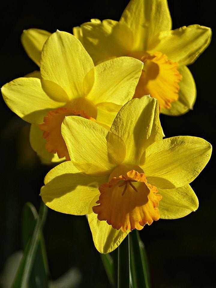Leur floraison est déjà finie !!!