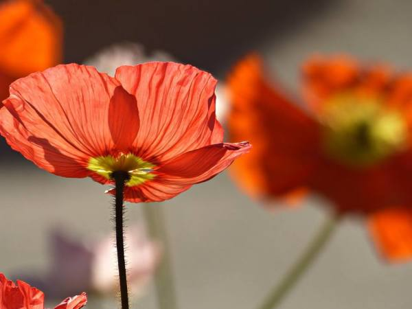 Sous les jupes des fleurs