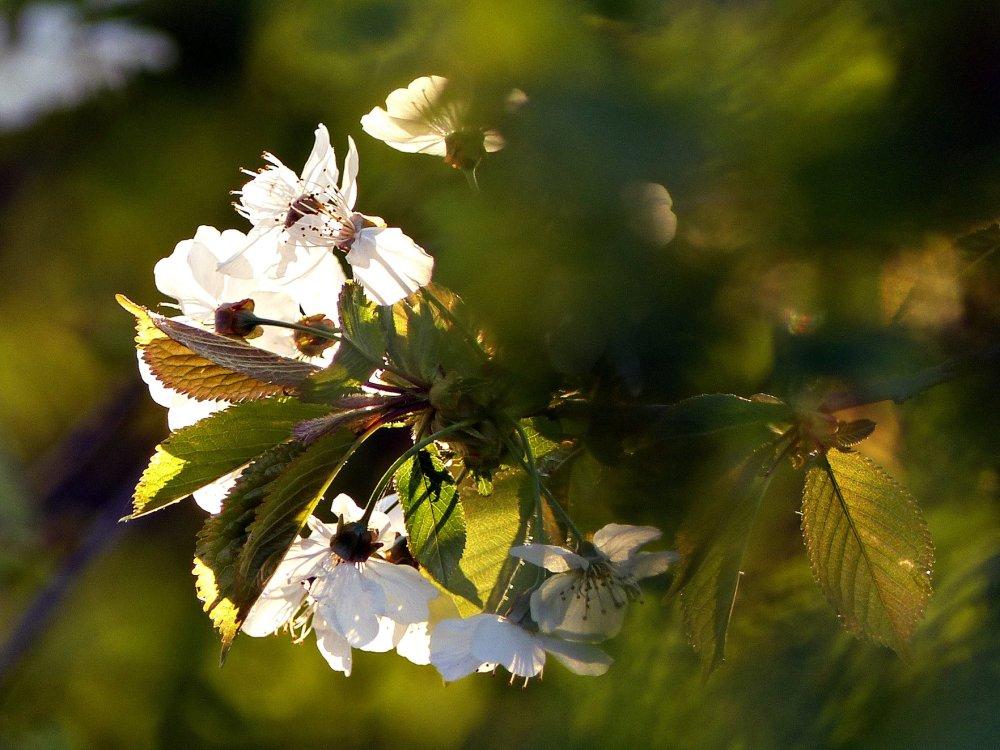 Le printemps explose