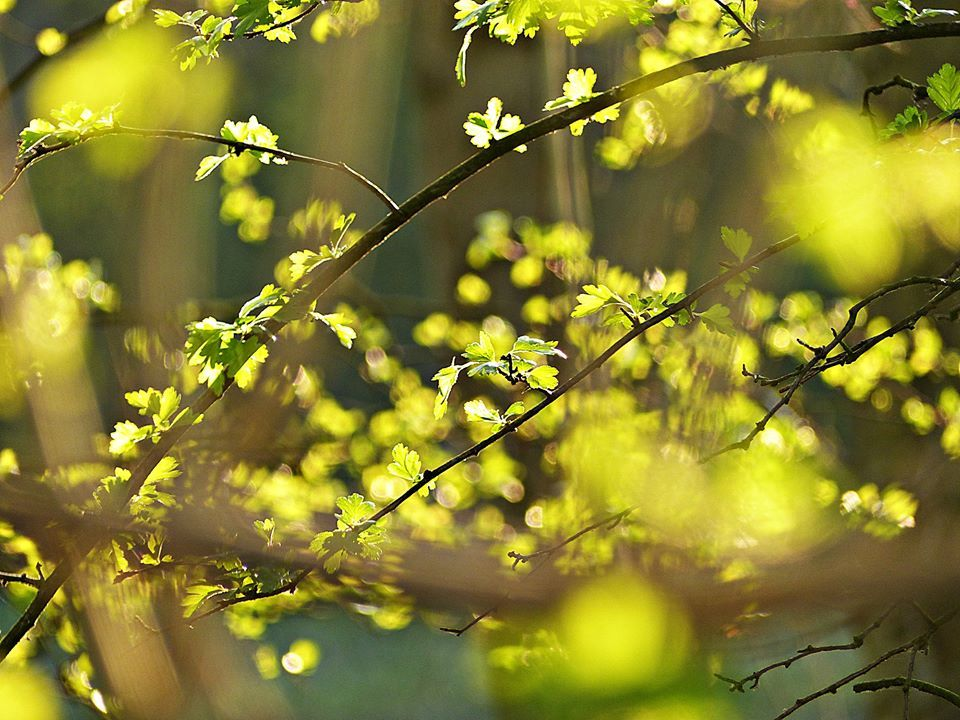 Green symphony...