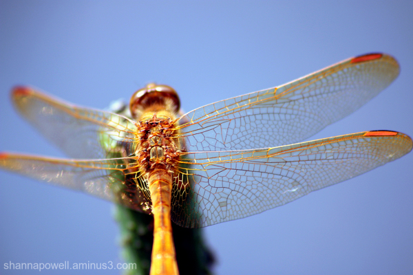 Dragonfly on a stalk