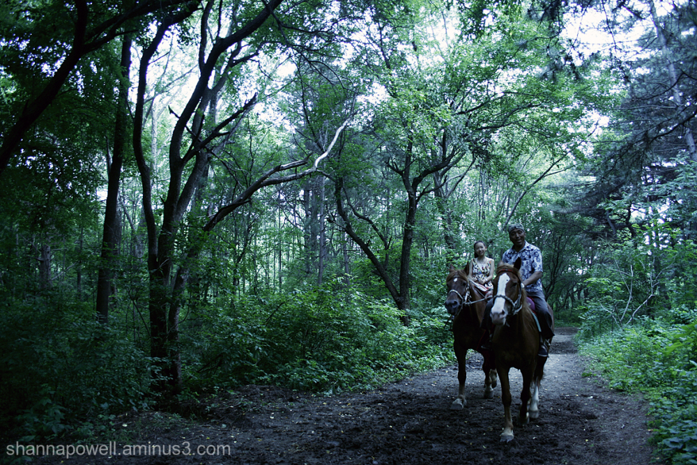 Horse riding through a forest