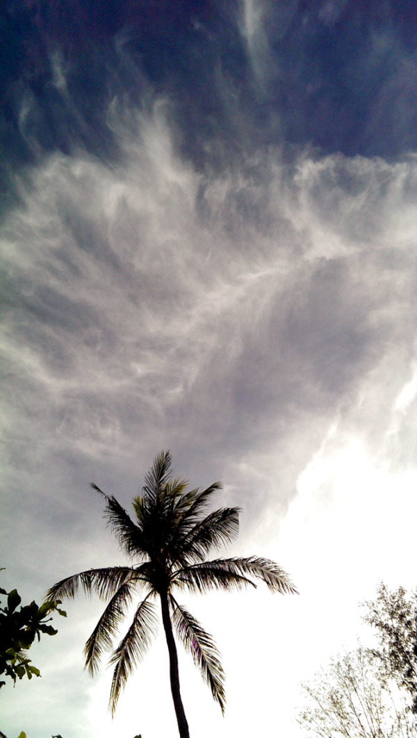 View of clouds in sky with palm tree