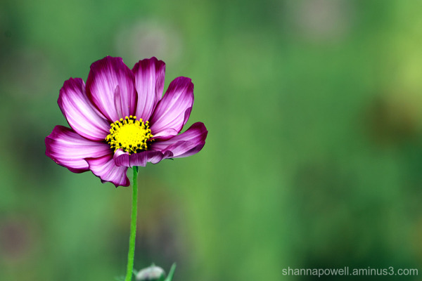 A purple flower on a green background