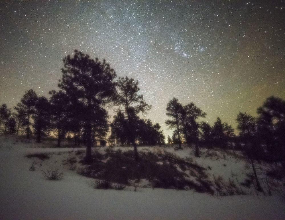 Stars above the pine forest