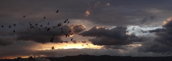 Birds at sunset Autumn - پرندگان در غروب پاییزی
