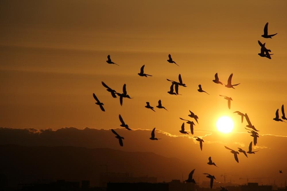 Evening,Flight,Birds,sunset