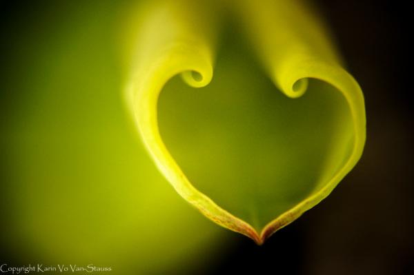 lotusflower, leaves, heartshaped