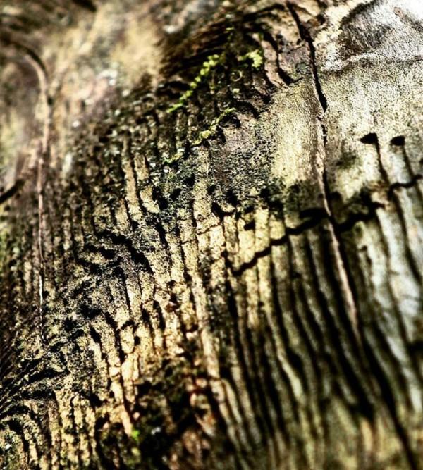 Termites art